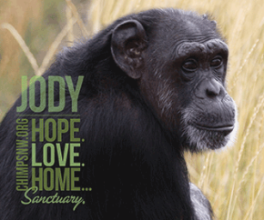 Grapes for Apes – Chimp Sanctuary NW Event